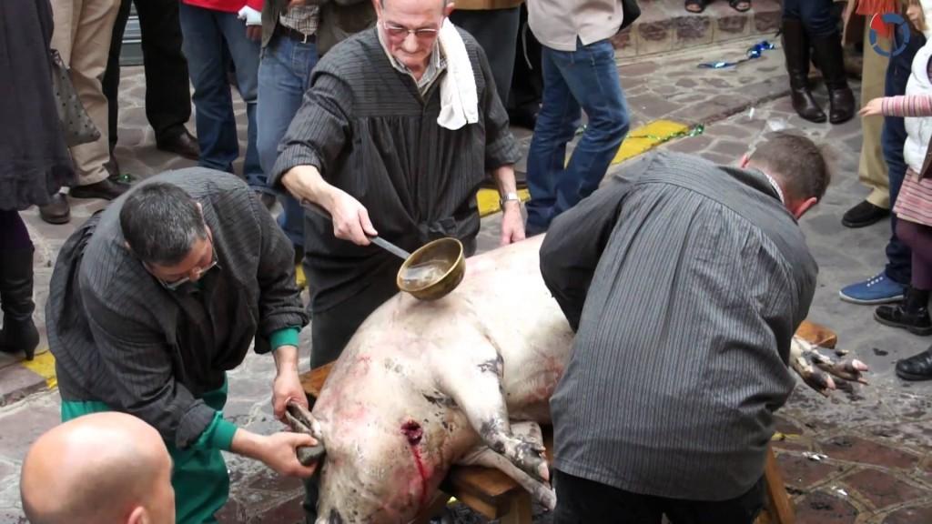 porcs1