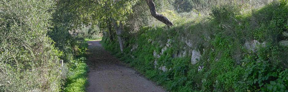 camino de piedras entre los árboles