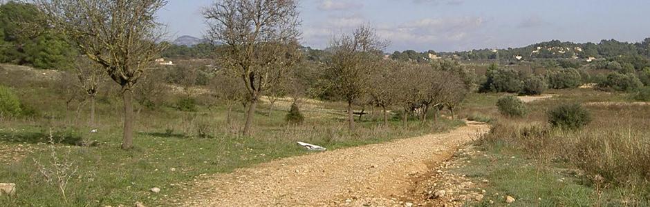 paisaje con camino de tierra en el centro