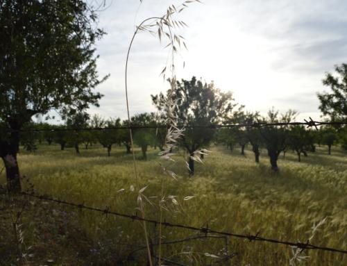 Obert el termini per sol.licitar autoritzacions particulars per a l'aprofitament de fruits de terrenys municipals